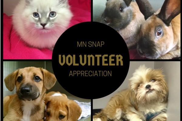 Invite Volunteer Event graphic