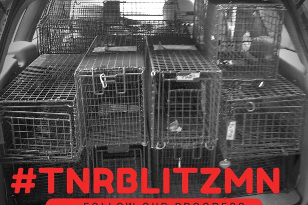 #Tnr Blitz(2)