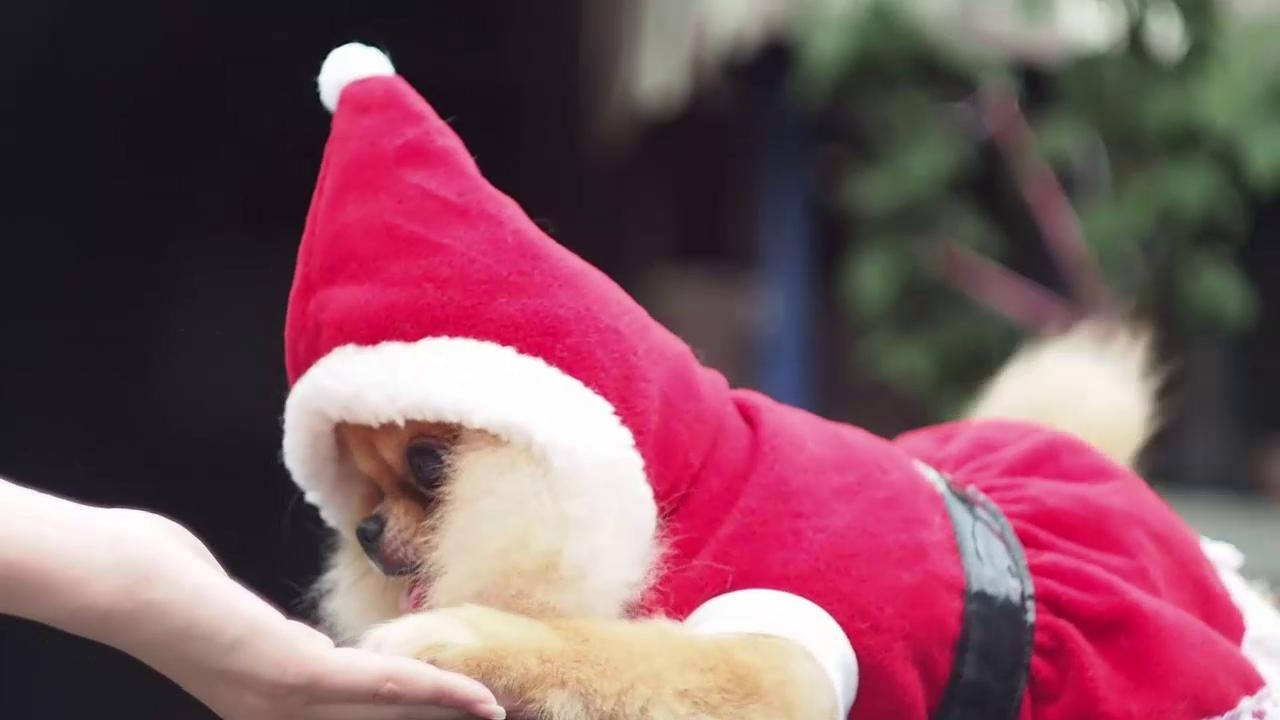 holidaydog