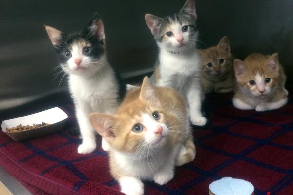 5-14-2015 SBAW kittens
